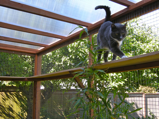 Diy Catio Plan The Sanctuary Catio Plans With 6x8 And