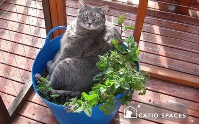 Ditch the Daffodils: Consider These Cat-Pleasing Plants for Your Catio This Spring