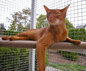 catio cat enclosure cat lounging mars catiospaces
