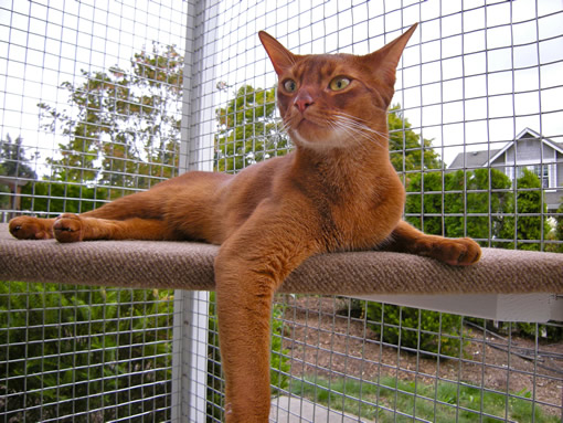 catio cat enclosure Haven Mars cat lounging catiospaces.com