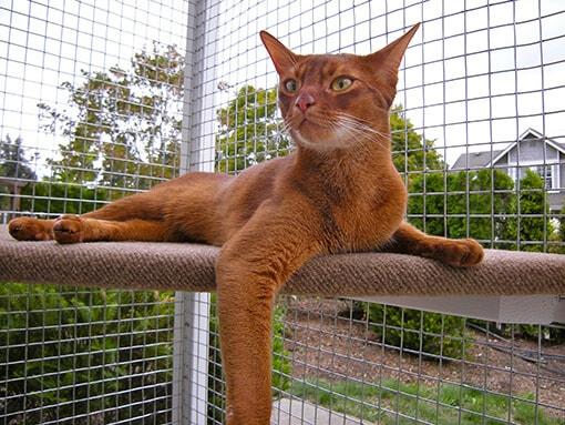 catio-cat-enclosure-cat-shelf-lounging-mars-catiospaces