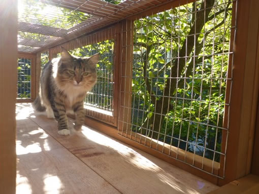 catiospaces animal welfare organization