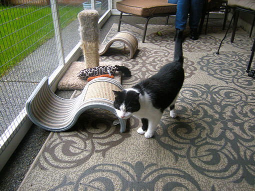 Accessories can provide enrichment in your catio
