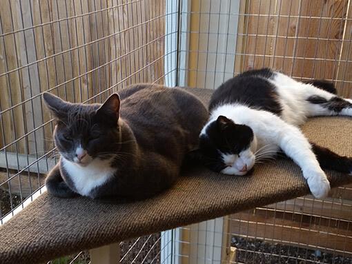catio-cat-enclosure-cats-lounging-missy-catiospaces