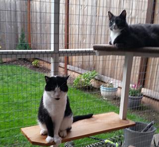catio-cat-enclosure-cats-shelves-missy-catiospaces