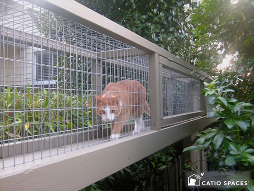 catio-cat-enclosure-catwalk-tunnel-cat-walking-serena-catiospaces