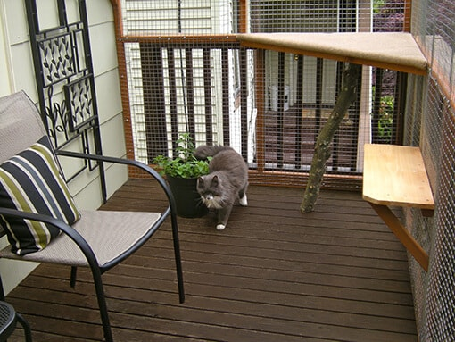catio-cat-enclosure-deck-cat-walking-malcolm-catiospaces