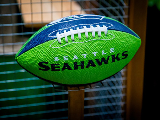 catio-cat-enclosure-football-seahawks-catiospaces