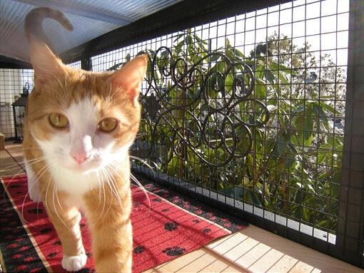 catio-cat-enclosure-window-box-black-cat-walking-catiospaces