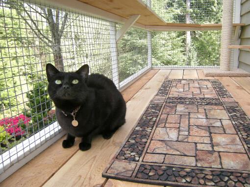 catio-cat-enclosure-window-box-cat-black-catiospaces