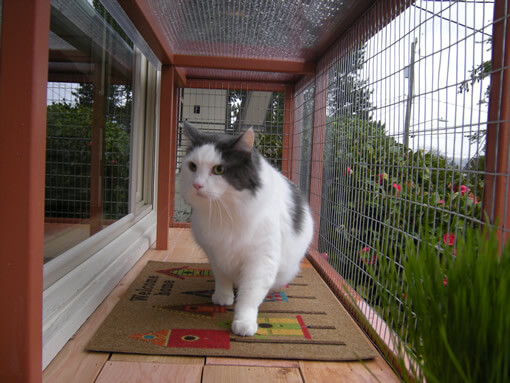 catio-cat-enclosure-window-box-cat-cat-walking-bjorklund-catiospaces