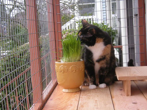 catio-cat-enclosure-window-box-cat-catnip-bjorklund.catiospaces