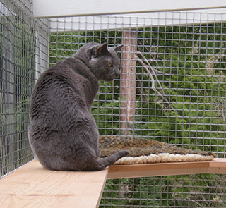 catio-cat-enclosure-window-box-cat-shelf-looking-out-griffin-catiospaces