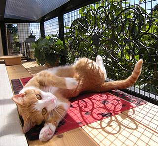 catio-cat-enclosure-window-box-cat-sunbathing-serena-catiospaces