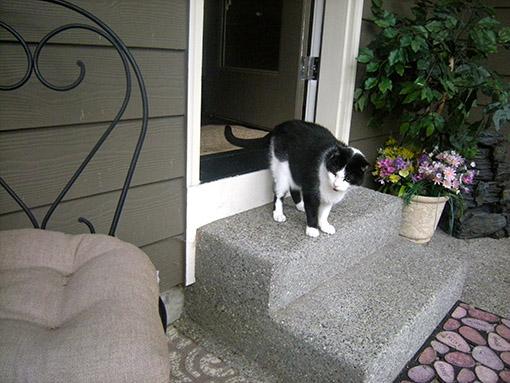 catio-cat-step-missy-catiospaces