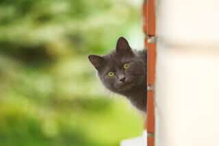 contact catio spaces curious cat
