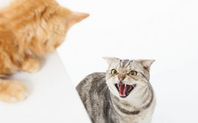 Is Cat Conflict an Issue in Your Home?