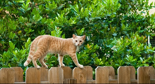 catio tip neighbor relations