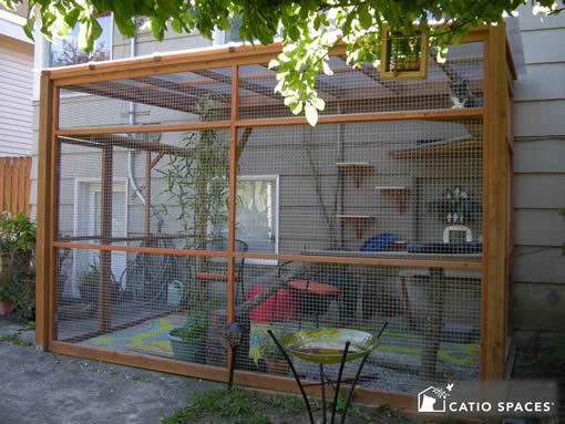 catio cat enclosure exterior bandit catiospaces