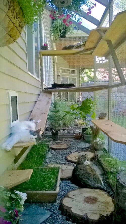 cats lounging in catio
