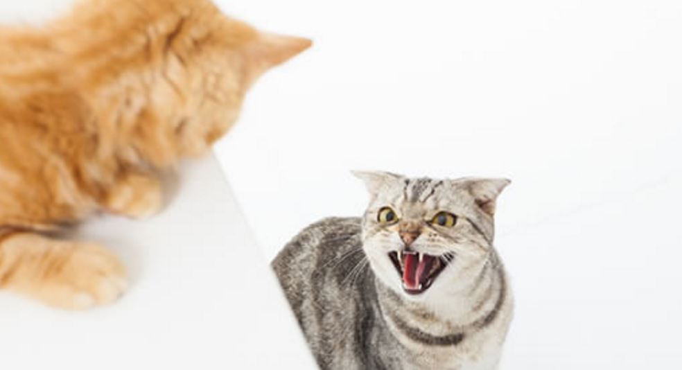 Cat conflict is avoidable