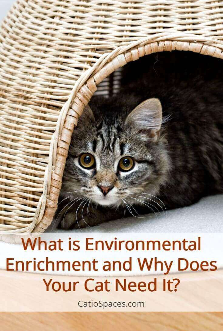 An increasing number of pet parents are beginning to understand the importance of providing environmental enrichment for their cat