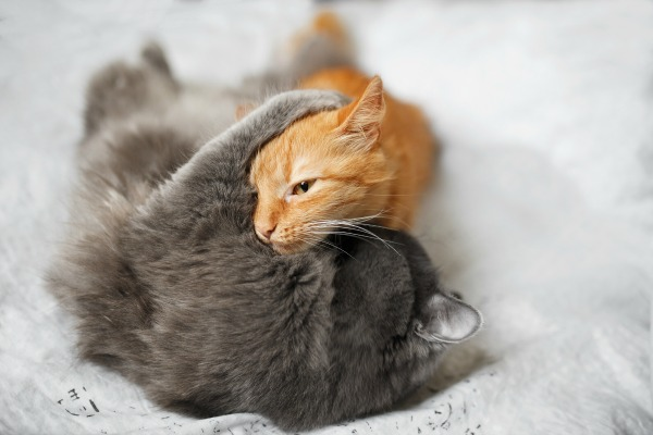 Wrestling cats might not be playing. It might be a sign of conflict.