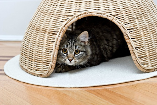 Cat hiding in a basket