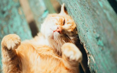 How Your Cat Can Safely Enjoy Time Outside