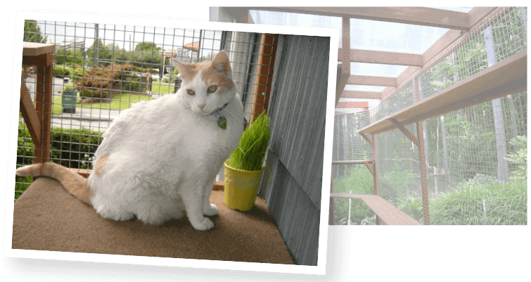 A catio can help resolve conflict between cats in the same house