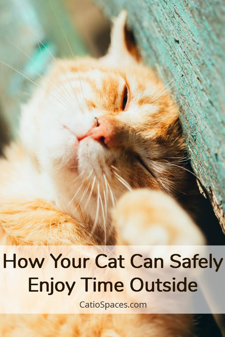 Indoor Cats Live Longer But That Doesn't Mean Your Cat Can't Have Fun Outside