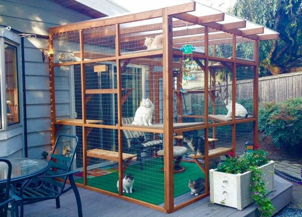 How Your Cat Can Safely Enjoy Time Outside Catio Spaces