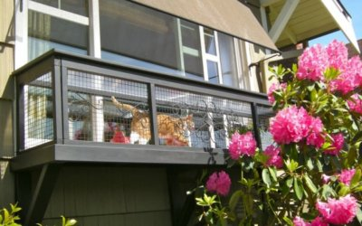 Things to Consider When Building a Catio