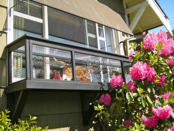 Cat in window box catio