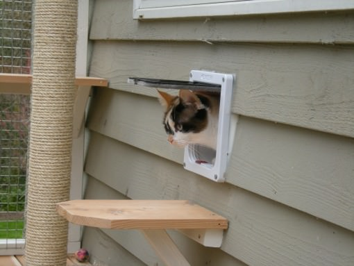 Cat exiting through a cat door into a catio