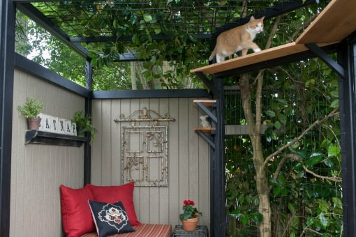 Orange tabby cat in a catio walking on a high shelf