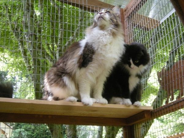 Two cats enjoying a perch in their catio