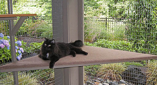 A Catio Not Only Ensures A Cat Stays In Your Own Yard, It Might Even Become  A Conversation Starter!