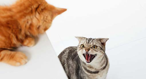 an introduction to the benefits of spaying your cat reducing the cat population Neutering your cat  reasons for neutering female cats population control it is important to neuter a female cat before she can have kittens herself this .