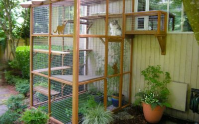 It's Easy to Build a DIY Catio for Your Cat!