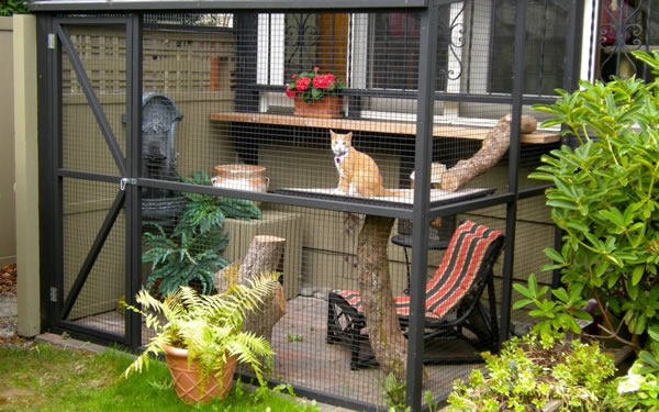 Top 10 Benefits of a Catio