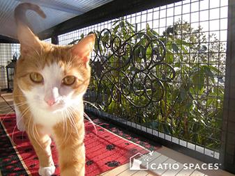 catio cat enclosure cat lounging mars catiospaces