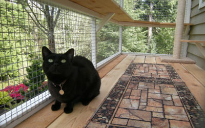 Wildlife Watcher Catio