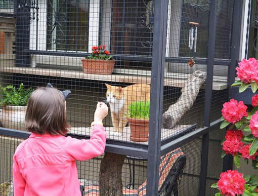 Catios Cat Enclosures Catio Tour Seattle Girl Serena Catiospaces