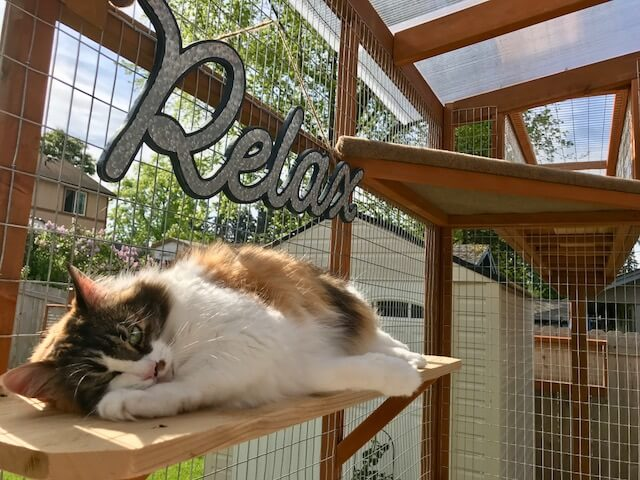 Catio Hacks: Our Top 8 Tips for DIYing Your Catio