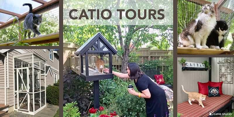 Catio Tour Title Catio Spaces Designs