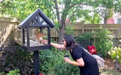 Catios & Catios Tours: A Growing Trend for Cat Enrichment and Safety
