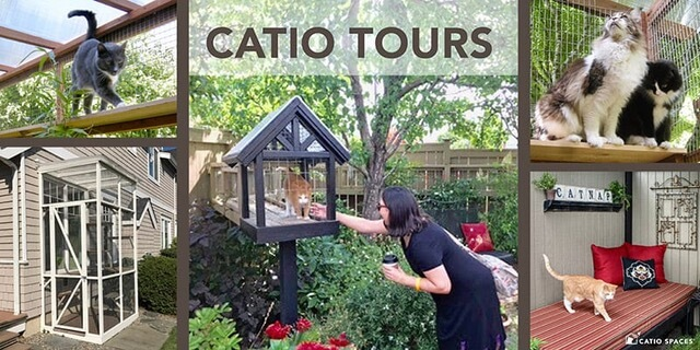 Catiospaces Catio Tours