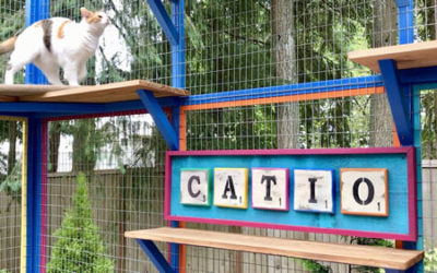 The Colorful Catio Menagerie!