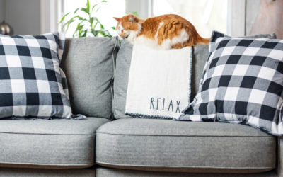 COVID-19:  Feng Shui Tips for Sheltering in Place with Cats and Dogs